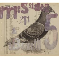 Messidor Pigeon